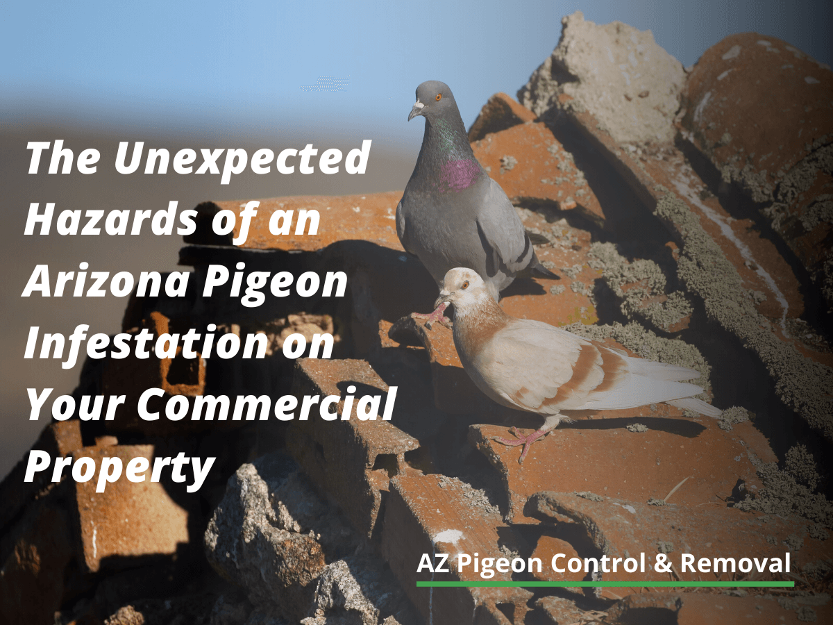 The Unexpected Hazards of an Arizona Pigeon Infestation on Your Commercial Property
