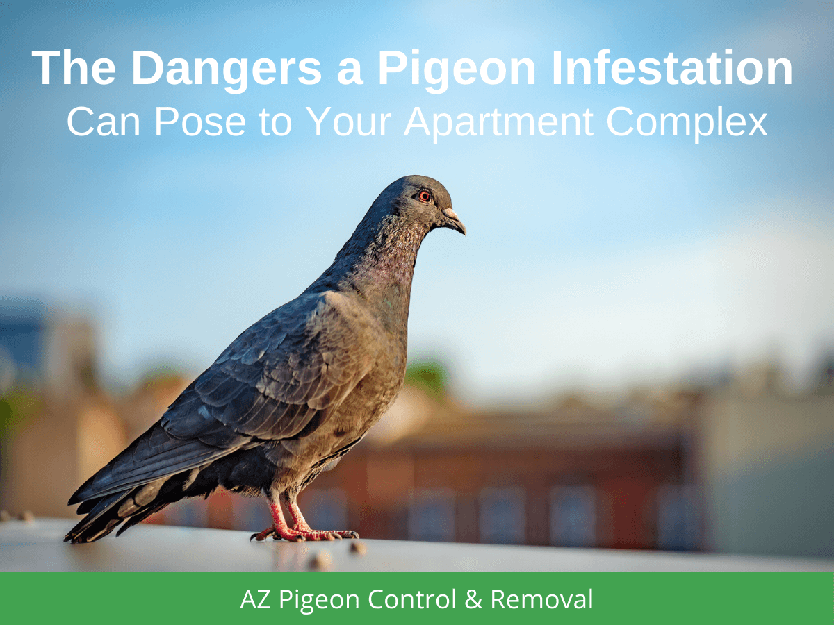 The Dangers a Pigeon Infestation Can Pose to Your Apartment Complex