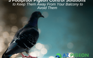 3 Foolproof Pigeon Control Solutions to Keep Them Away From Your Balcony