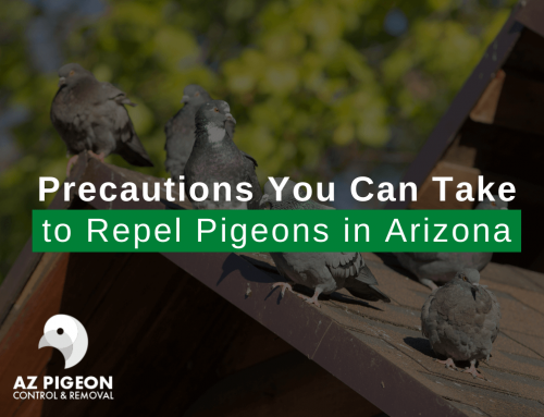 Precautions You Can Take to Repel Pigeons in Arizona