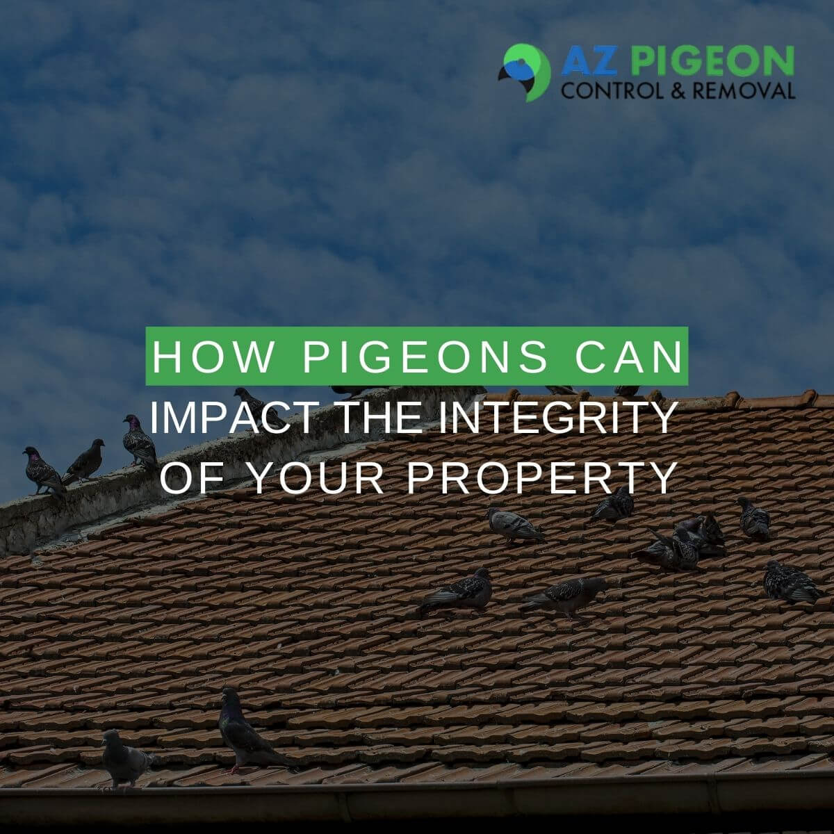 How Pigeons Can Impact the Integrity of Your Property